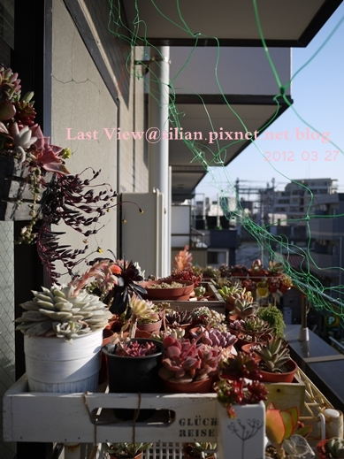 20120327 160047 Succulents