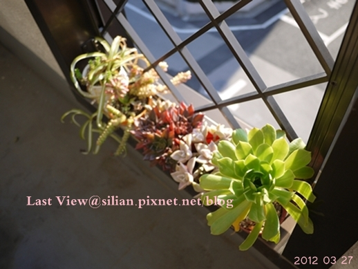 20120327 160135 Succulents