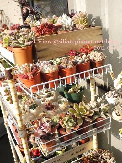 20120327 162743 Succulents