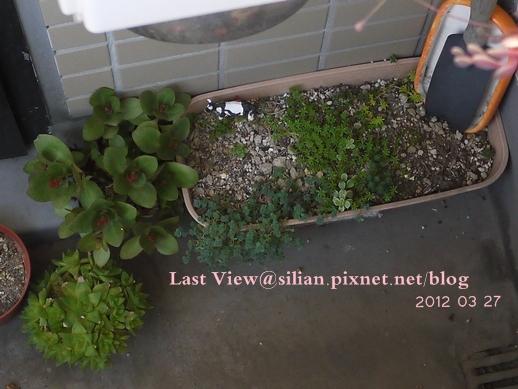 20120327 162756 Succulents