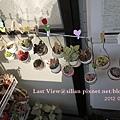 20120327 162811 Succulents