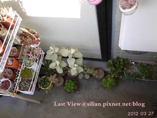 20120327 162815 Succulents