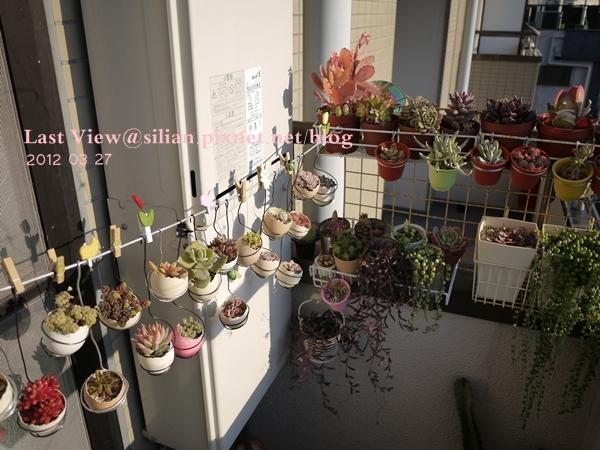 20120327 162823 Succulents