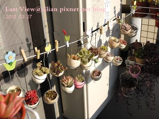 20120327 162828 Succulents