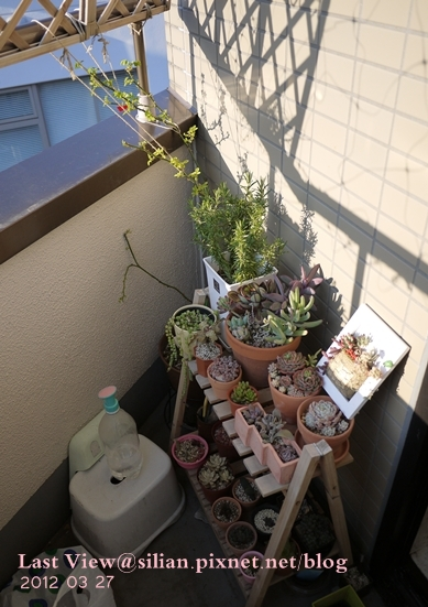 20120327 162842 Succulents