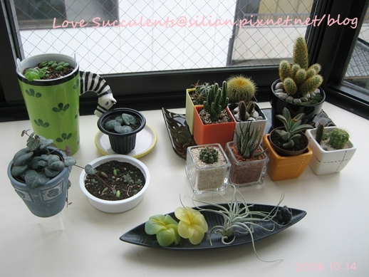 20081014 092905 Succulents