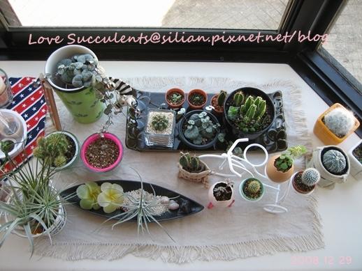 20081229 131757 Succulents