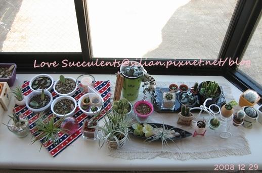 20081229 131816 Succulents