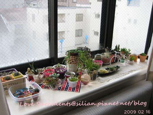 20090216 073848 Succulents