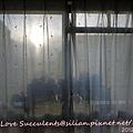 20120312 165100 Succulents