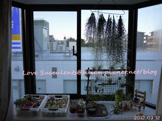 20120312 165318 Succulents