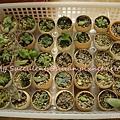 20120327 211823 Succulents