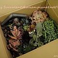 20120327 222932 Succulents