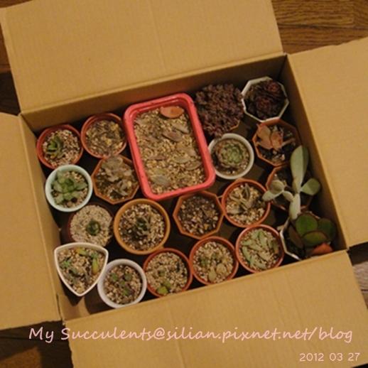20120327 223733 Succulents