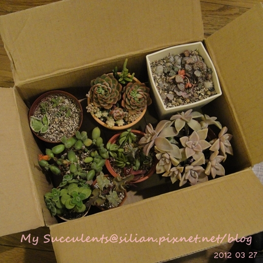 20120327 224441 Succulents