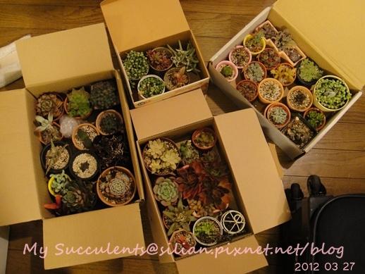 20120327 231408 Succulents