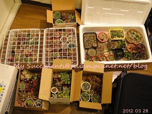 20120328 012134 Succulents
