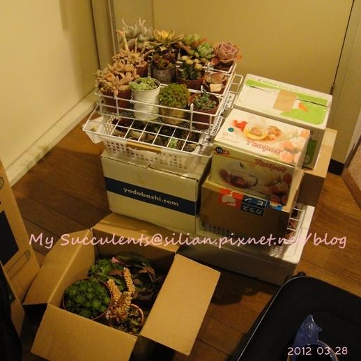 20120328 021645 Succulents