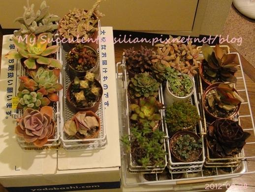 20120328 022002 Succulents