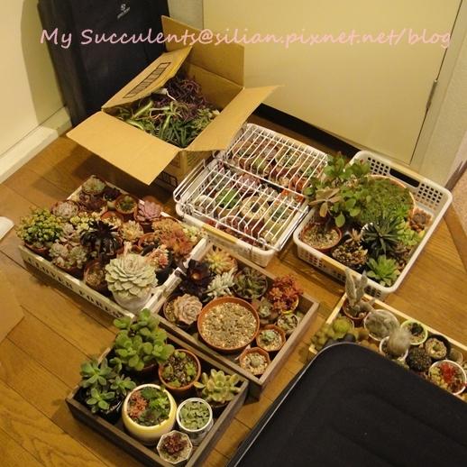 20120328 025017 Succulents
