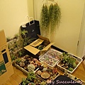 20120328 025119 Succulents