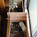 20120328 132304 Succulents