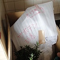 20120328 132311 Succulents