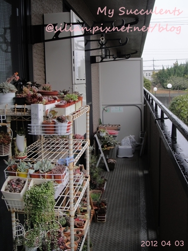 20120403 144715 Succulents