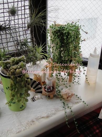 20120222 152446 Succulent