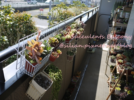 Succulents Balcony