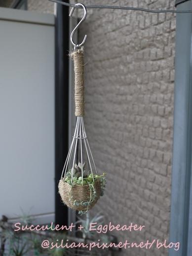 20120514 144657 Succulent Eggbeater