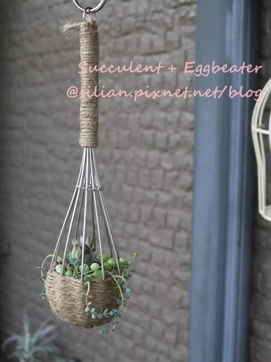 20120514 144717 Succulent Eggbeater