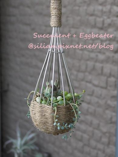 20120514 144717 Succulent Eggbeater s