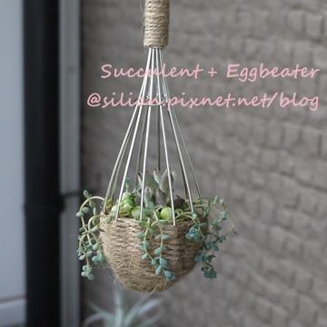 20120514 144750 Succulent Eggbeater