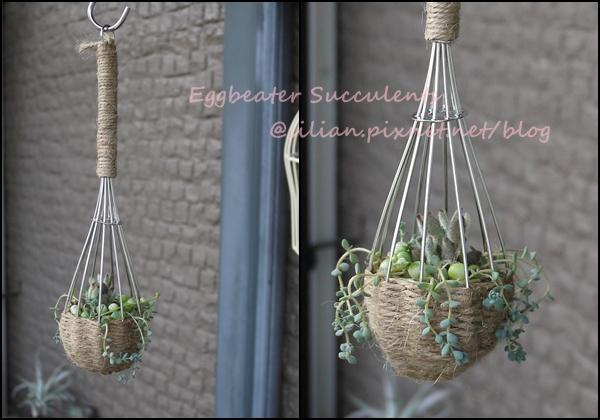 20120514 210752 Succulent Eggbeater