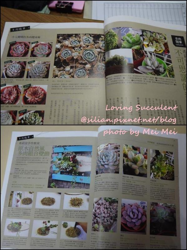 20120620 花草遊戲自然風多肉組合