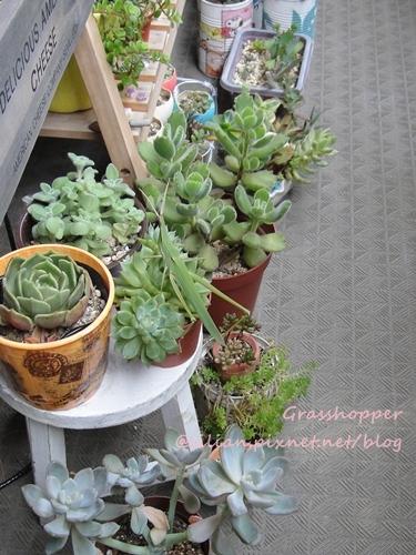 Grasshopper & Succulent