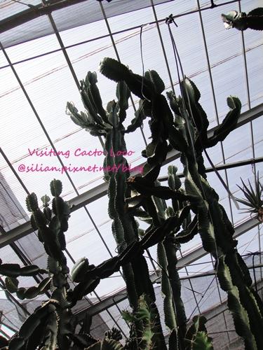 20120807 150330 Cacto Loco