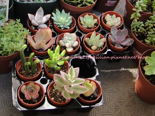 Succulent New Members
