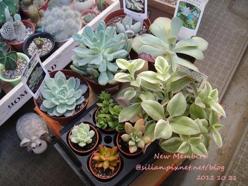 Succulent, New Members