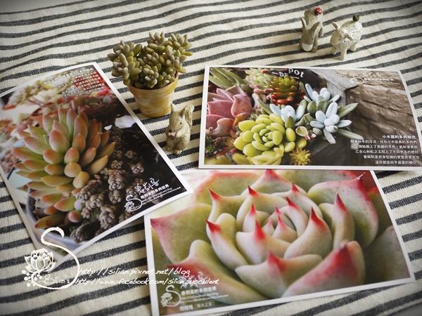 希莉安的東京多肉植物日記預購贈品