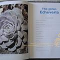 The Genus Echeveria