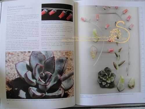 The Genus Echeveria