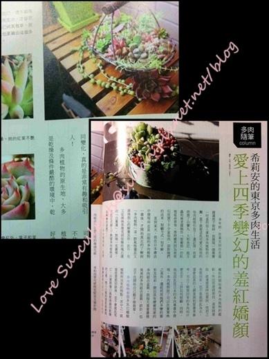 201204 花草遊戲第61期希莉安多肉專欄