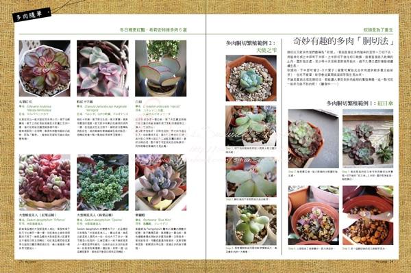 201210 花草遊戲第64期希莉安多肉專欄