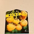黃色覆盆莓 Yellow Rasberry