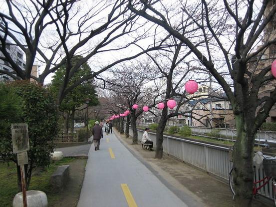 南砂町仙台堀川公園的櫻花隧道 好長一條全都是櫻花~盛開一定超美的!