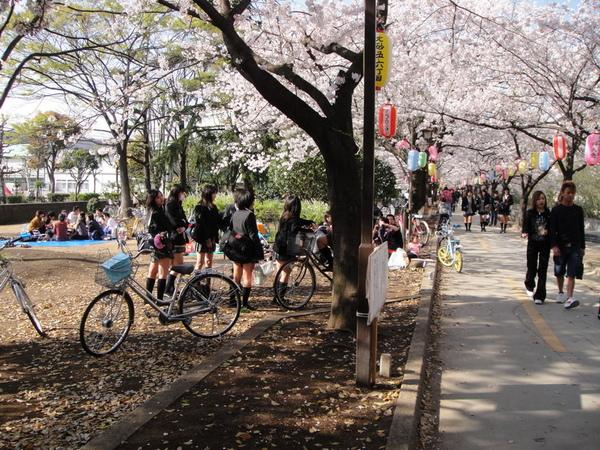 這張是想拍那群穿著超短裙的女學生啦~只是不好意思明目張膽的拍,裝做在拍櫻花。