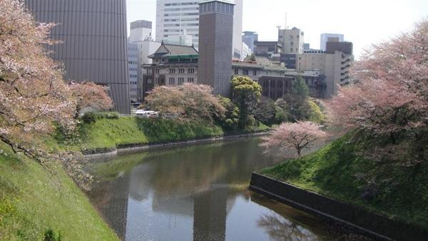 雖然己不見櫻花盛況美景,但還是有看到落櫻的浪漫~
