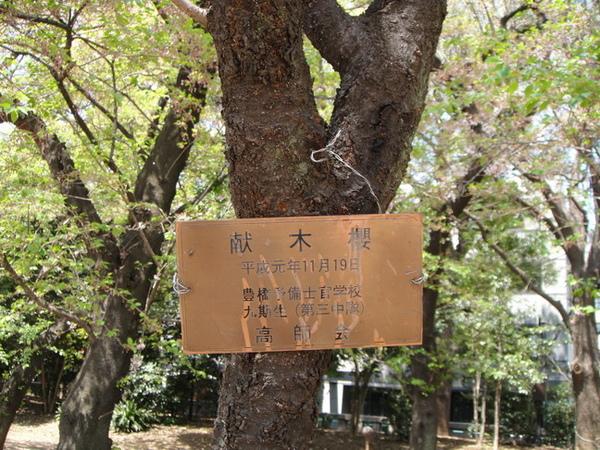 献木櫻的牌子,這株是紀念日軍其中的一隊~